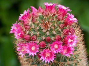 cactussen 1